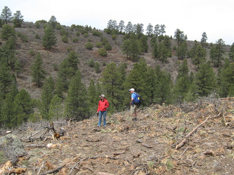 Last year many trees were removed due to an infestation.  This is part of the area we replanted.
