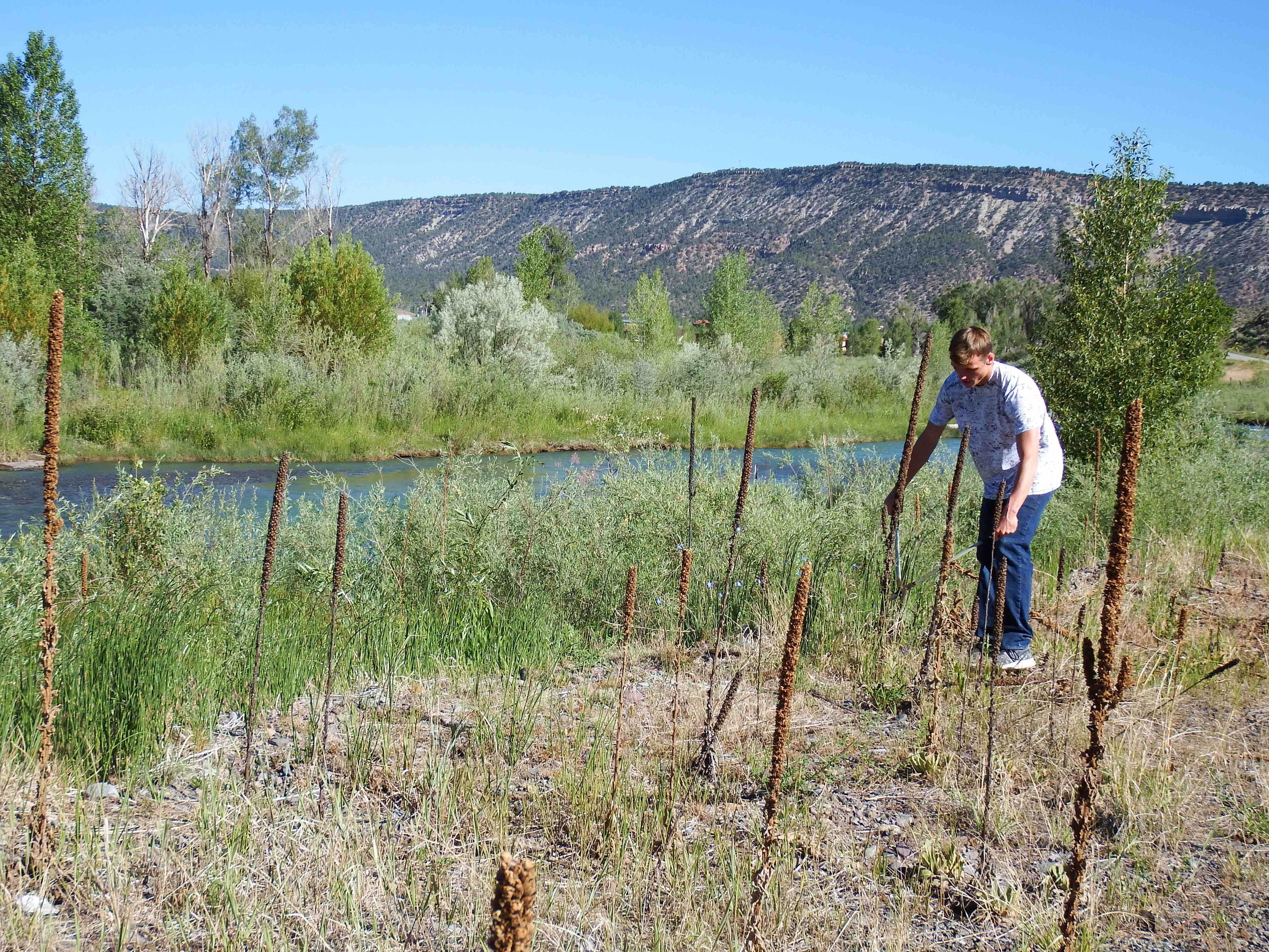 Riparian & River Habitat Restoration